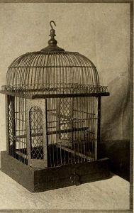 skylark-cage